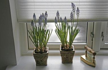 Springtime indoor