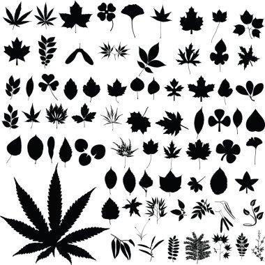 Marijuana plants silhouettes