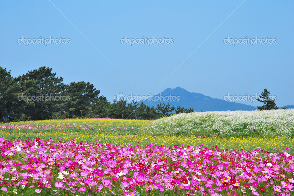 Field of flowers with volcano
