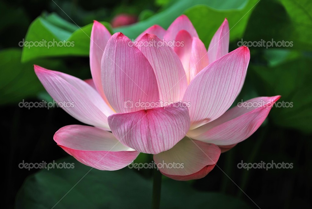 Изображения Будды  sawadeekrapru