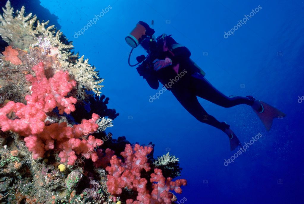Diver and soft coral wall