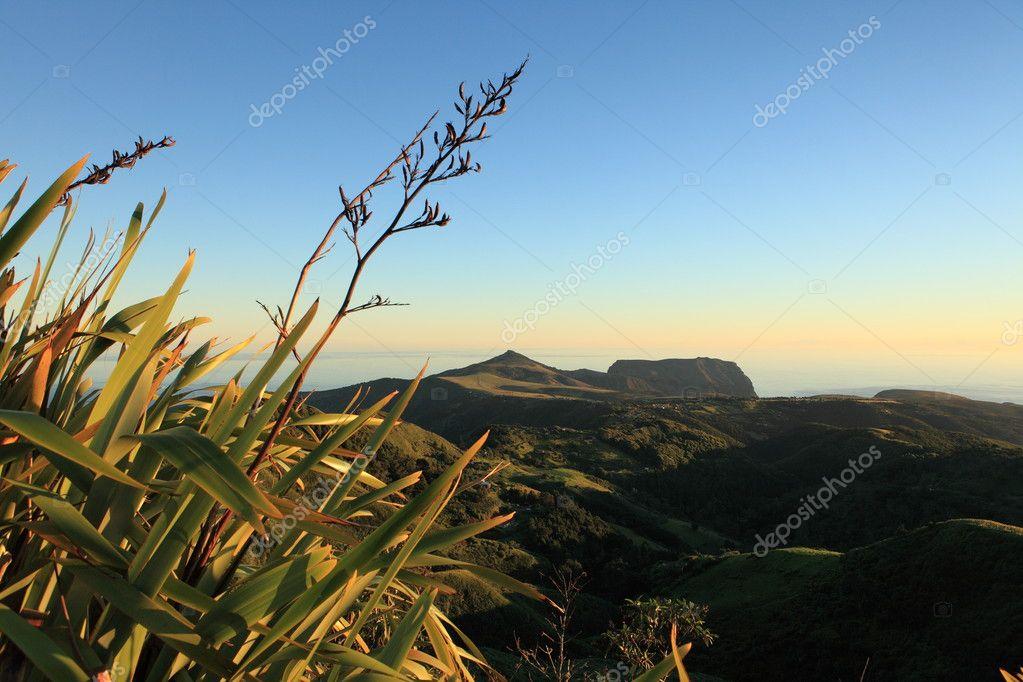 Flax plants in dawn light