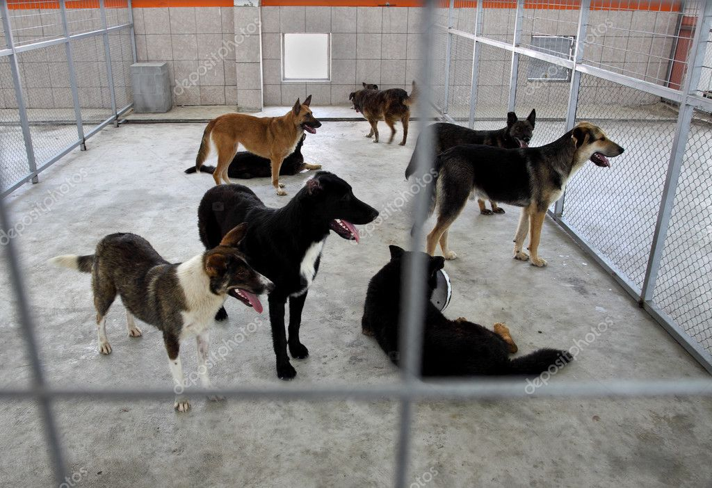 Homeless dogs behind fence in shelter