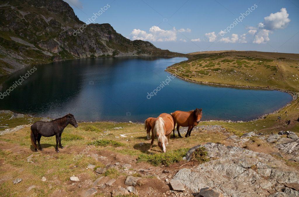 Horses by a Rila mountains lake