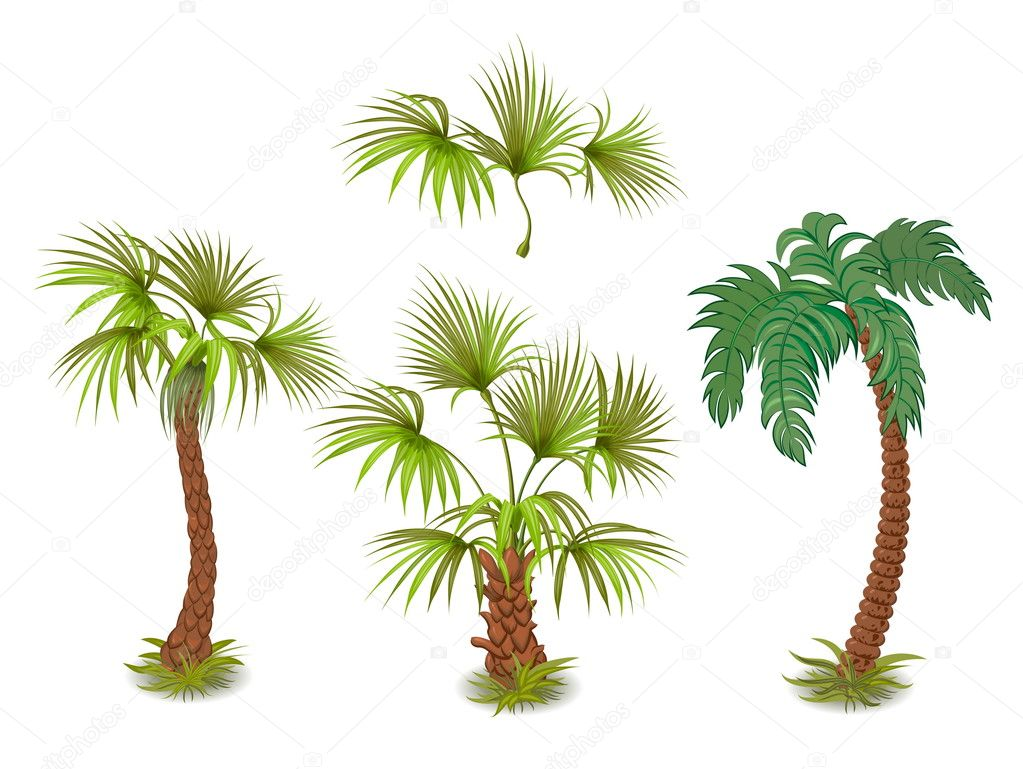Collection of tropical palm trees