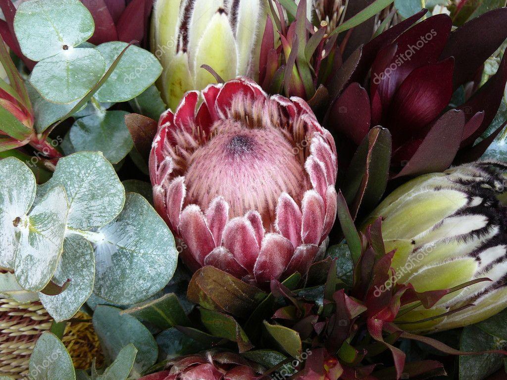 Protea and Gum Bouquet