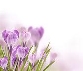 Fotografie wiesenblumen
