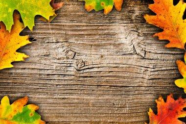Autumn motives