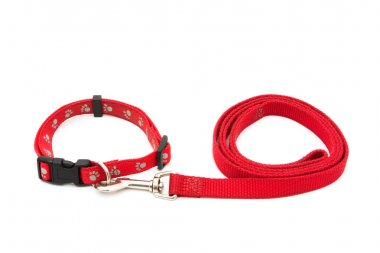 Dog Collar and Leash