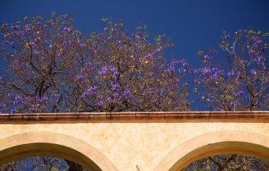 Purple Flowers White Adobe Wall Queretaro Mexico