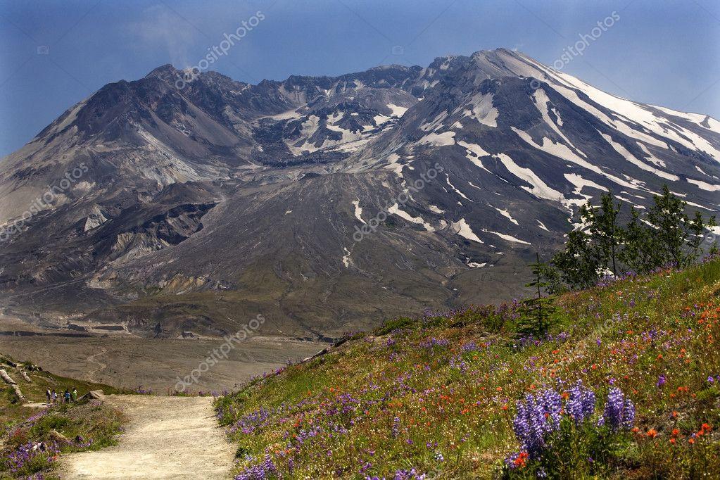 Wildflowers Trail Mount Saint Helens National Park Washington