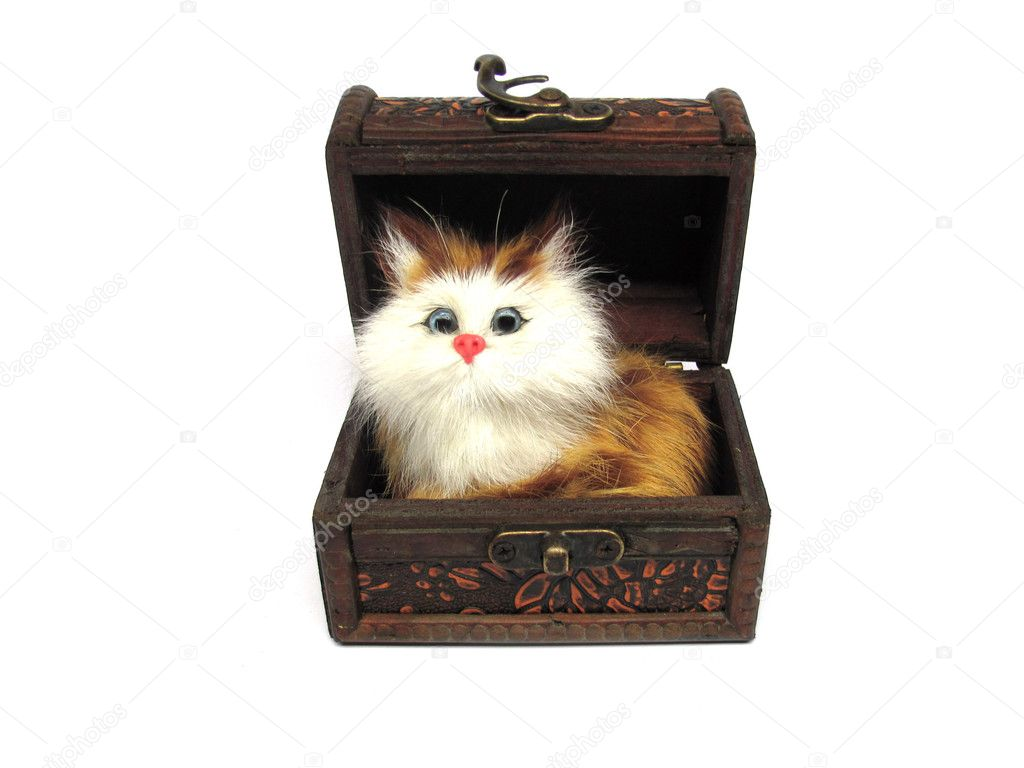 Cat in a chest