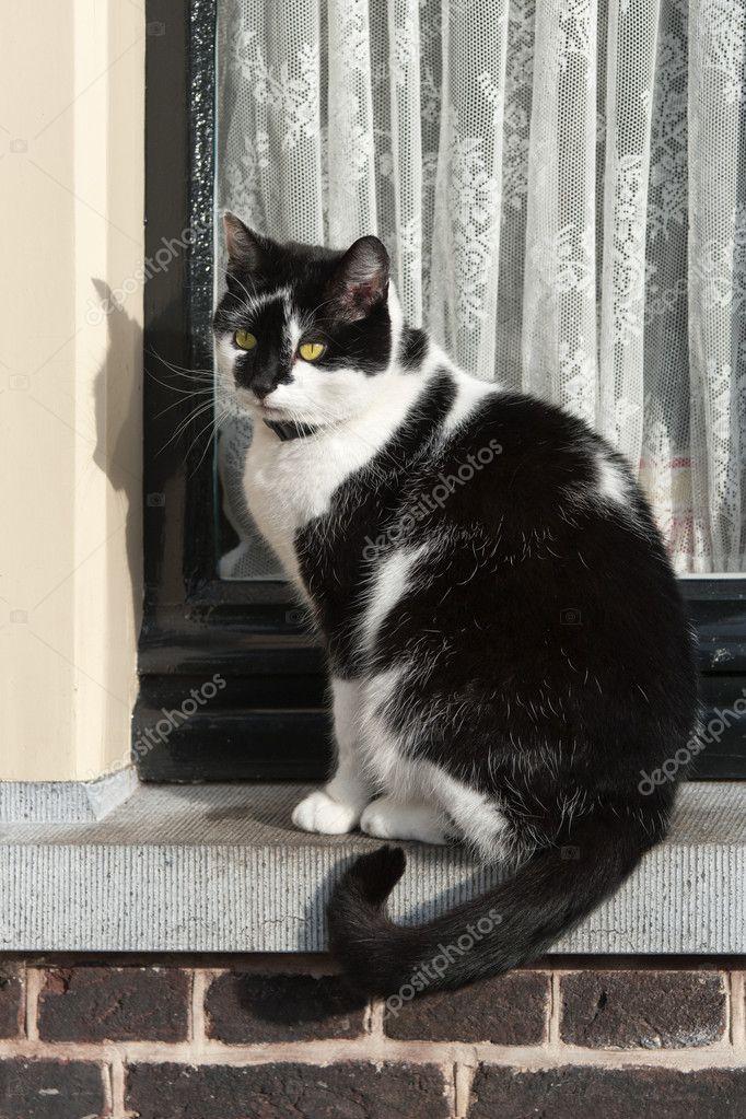 Cat On Window Sill Stock Photo 169 Rsloots 6008925