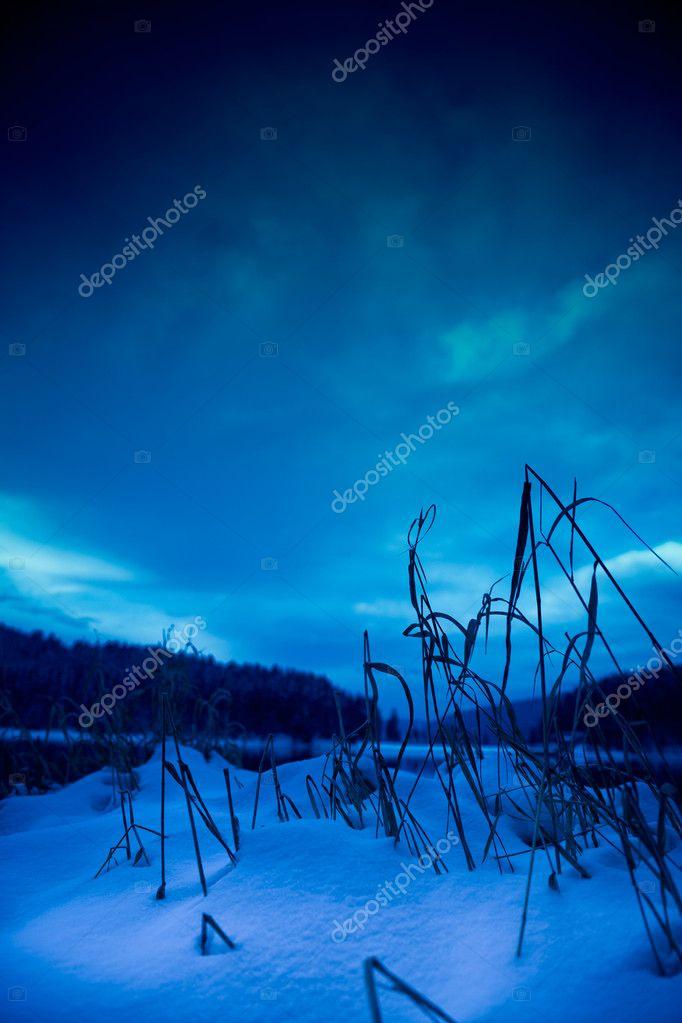Фотообои Night forest