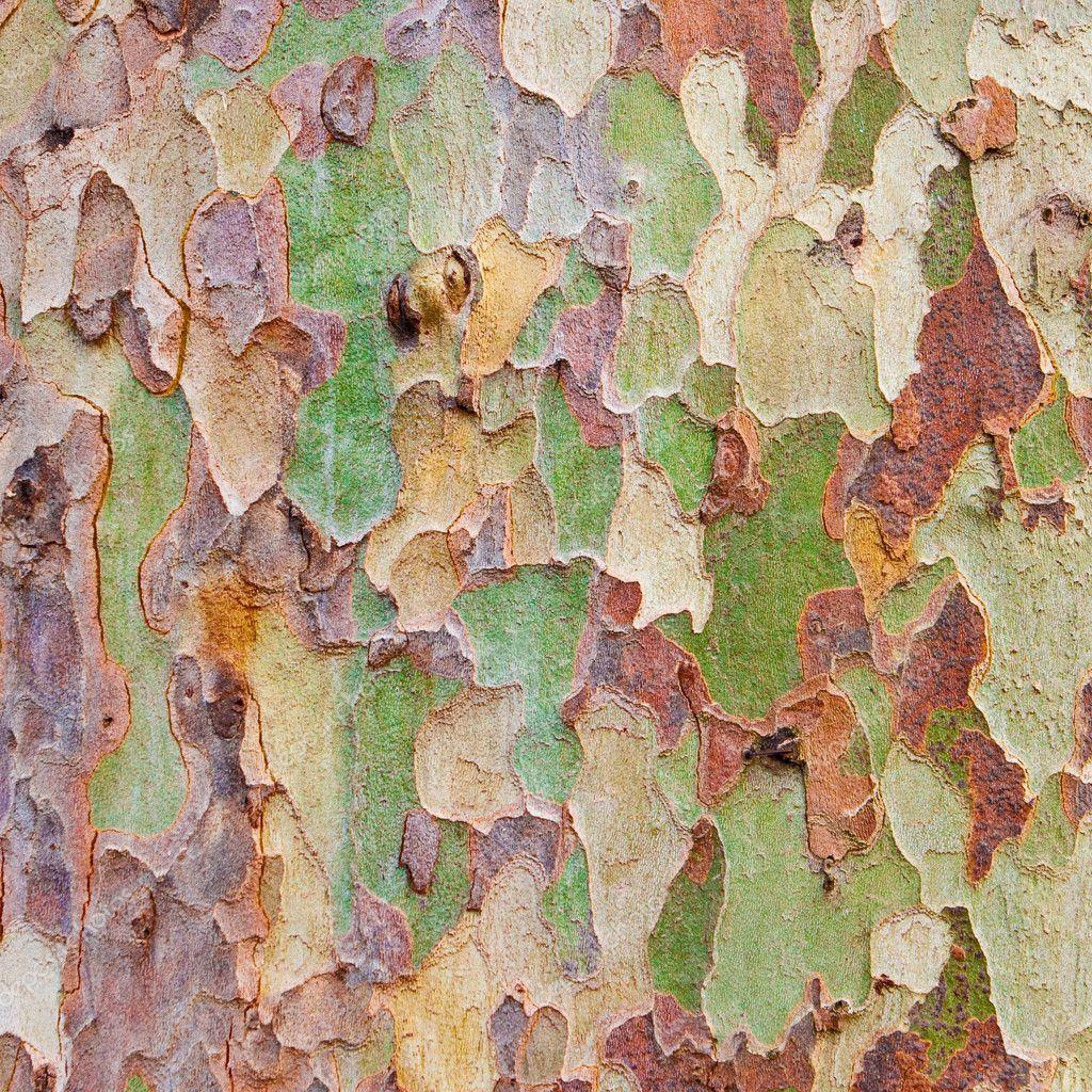 Tree bark — Stock Photo © trgowanlock #6550583