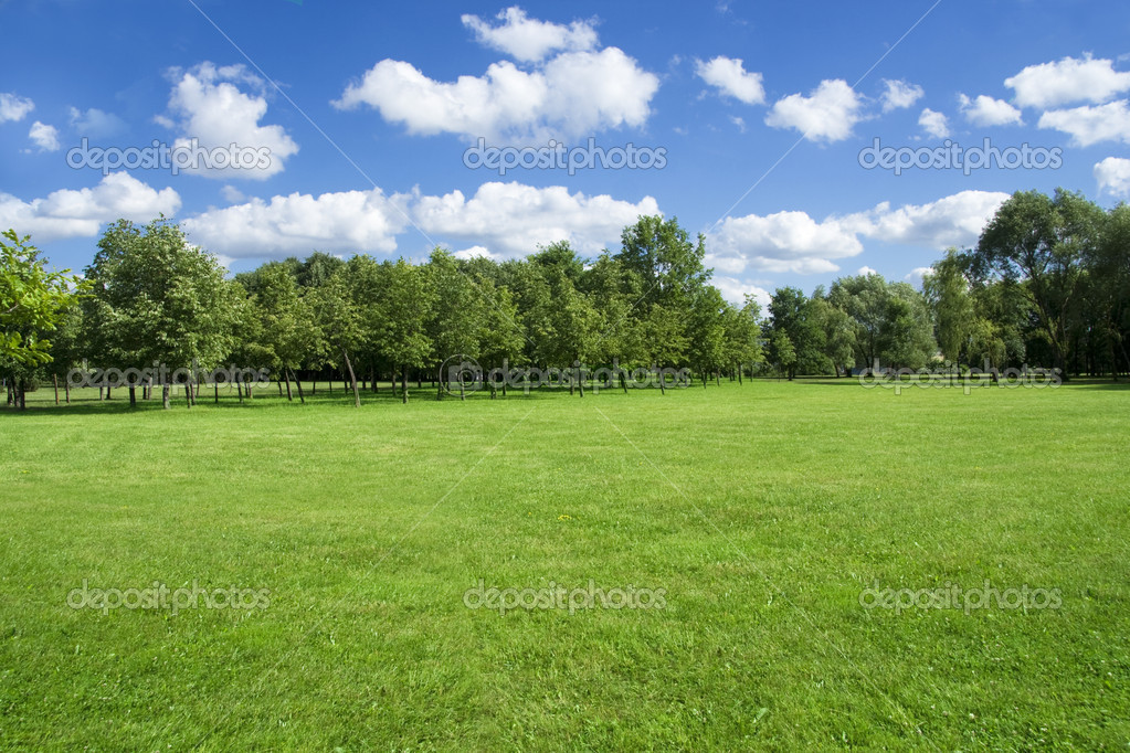 Summer landscape of grass and trees.