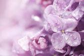 krásné květy