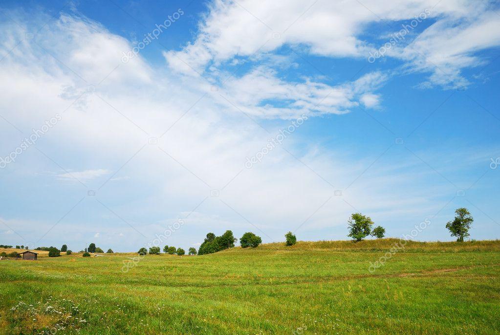 Фотообои Green field