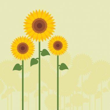 Yellow sunflowers vector
