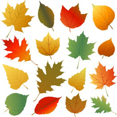 Autumn leaves collection stock vector