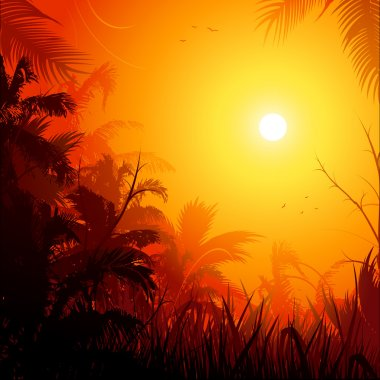 Jungle sunset background
