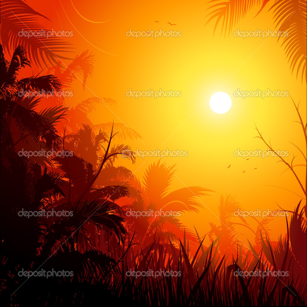 Jungle sunset background