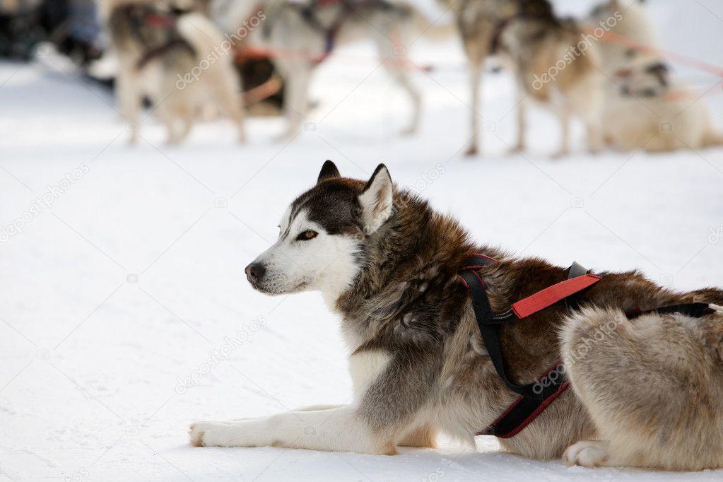 huskies 68 61 gliac win - 1023×682