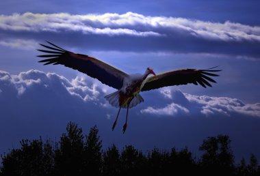 Stork flying over the trees