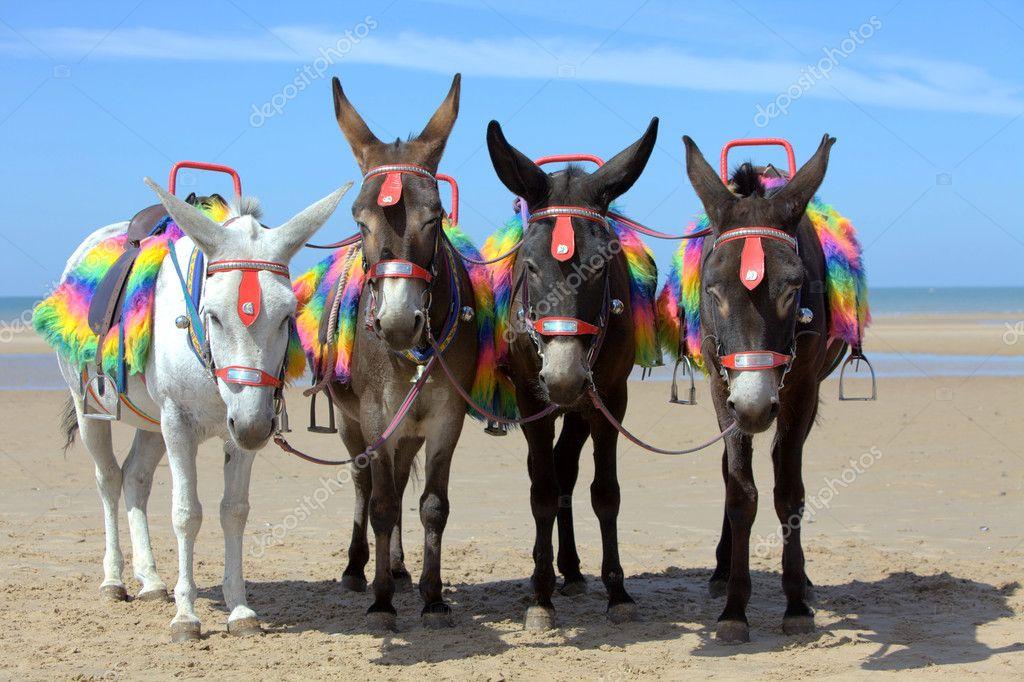 Donkeys at a beach resort