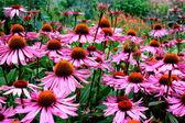 Fotografie Pink and orange flowers