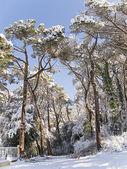 neve foresta coperta a Barcellona