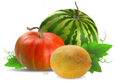 Melon watermelon and pumpkin