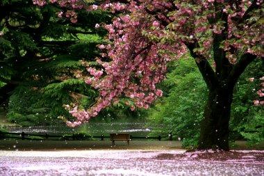 "Картина, постер, плакат, фотообои ""вишневый цвет на выжигании - Токио"", артикул 6214067"