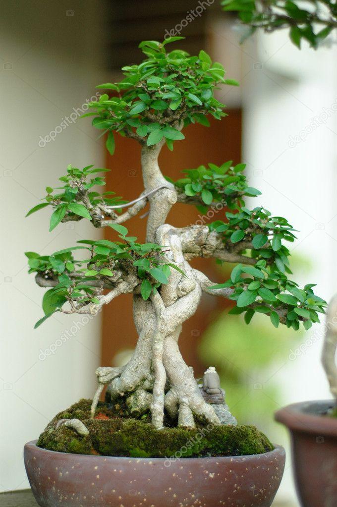 Bonsai Baum Und Mini Landschaftsbau Stockfoto Andylimdotcom 6146506