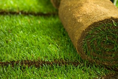 Turf grass rolls closeup