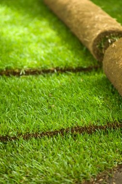Turf grass rolls partially unrolled