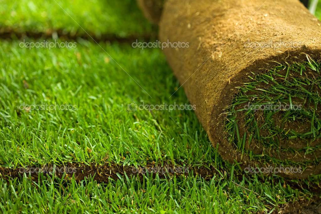 Turf grass rolls closeup