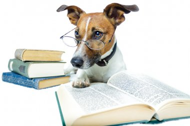DOG LEARNING