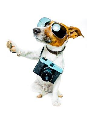 Dog using camera
