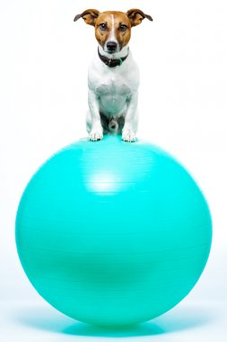 DOG on A BALL