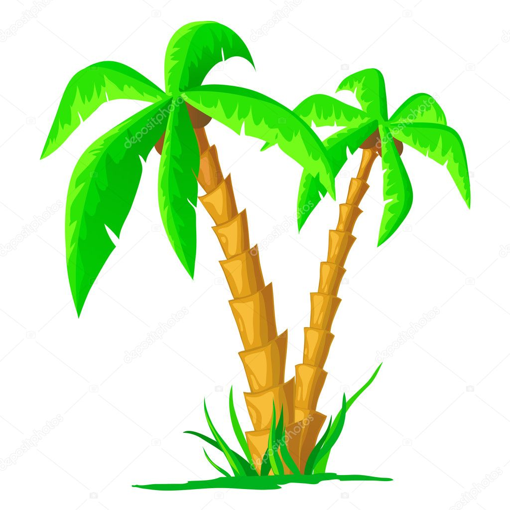 Palm tree cartoon png | Cartoon tropical palm isolated on white ...