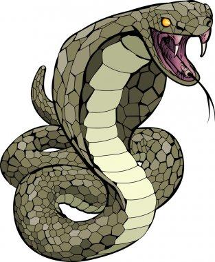 Cobra snake about to strike illustration