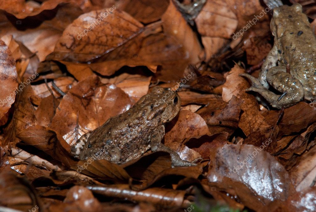 Toad Walking Through Forest