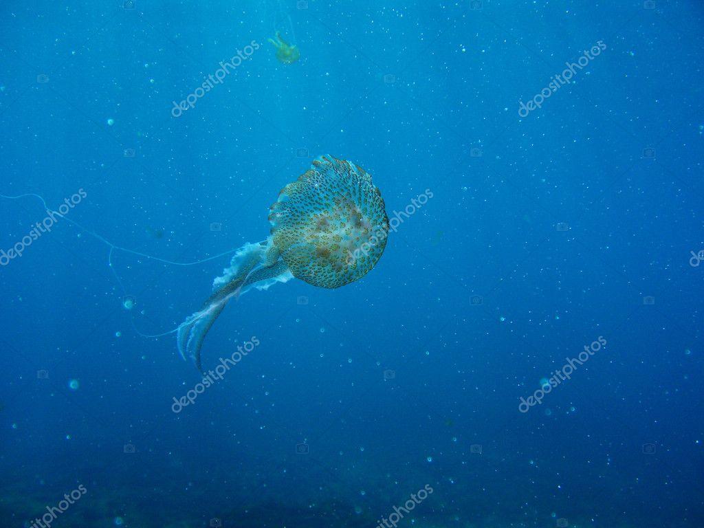 Underwater Shot Of Jelly Fish