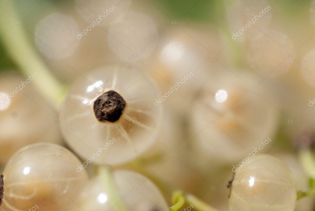 Macro Shot On Rare White Currant