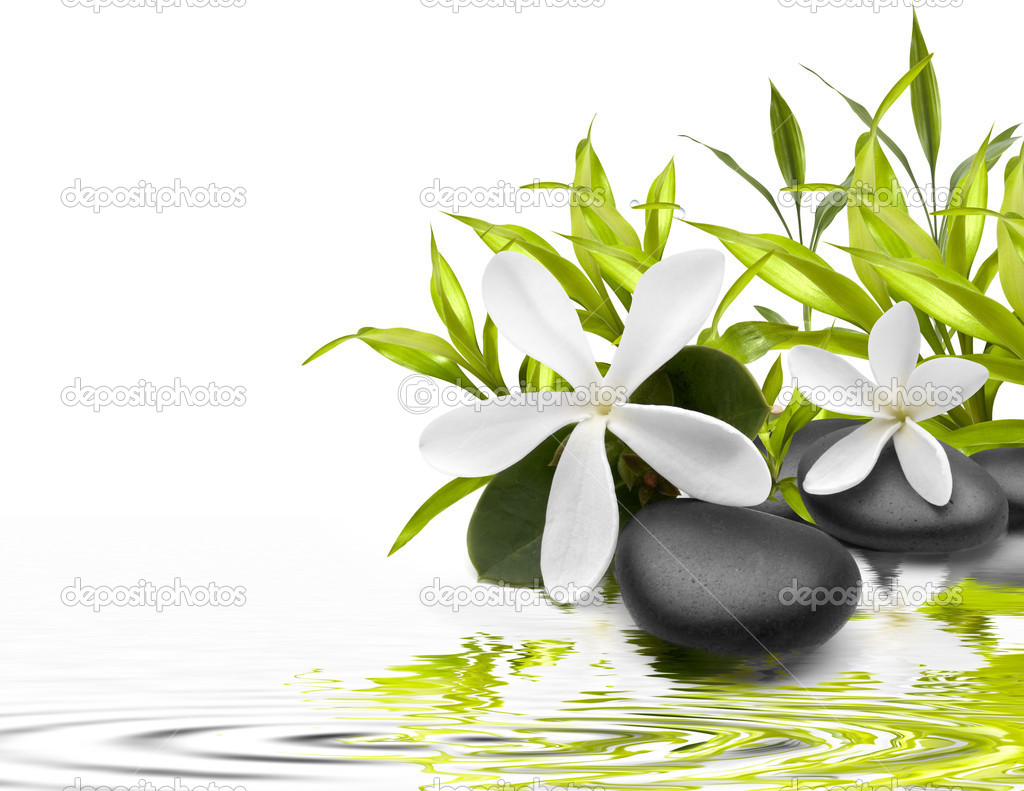 Wet stones with a green leafs and flowers in the water
