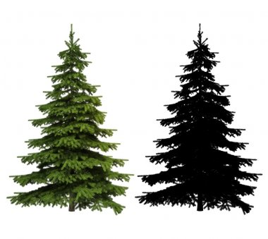 Ultra detailed Picea spruce tree with silhouette included