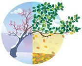 Fotografie Jahreszeiten-Zyklus