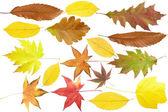 Kolekce podzimních listů