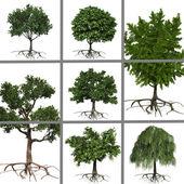 koláž stromů